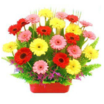 Arrangement of 30 Mixed Gerberas
